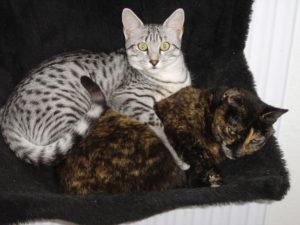 2007-Jimmy en Roover