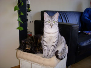 2008-Jimmy en Roover