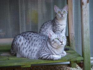 2009-Jimmy en Lulu