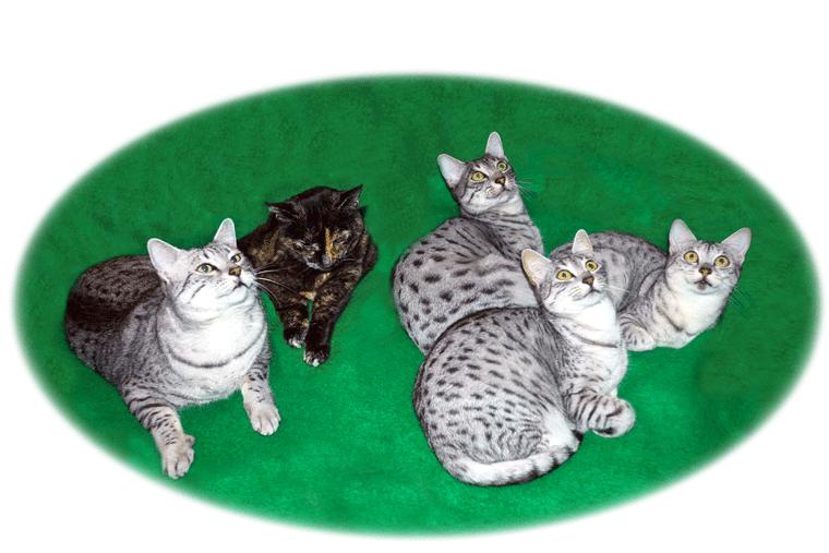 Kattenfamilie